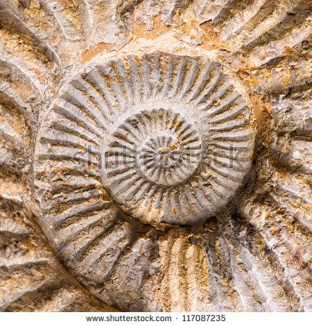 Shell Fossil Stock Photos, Royalty.