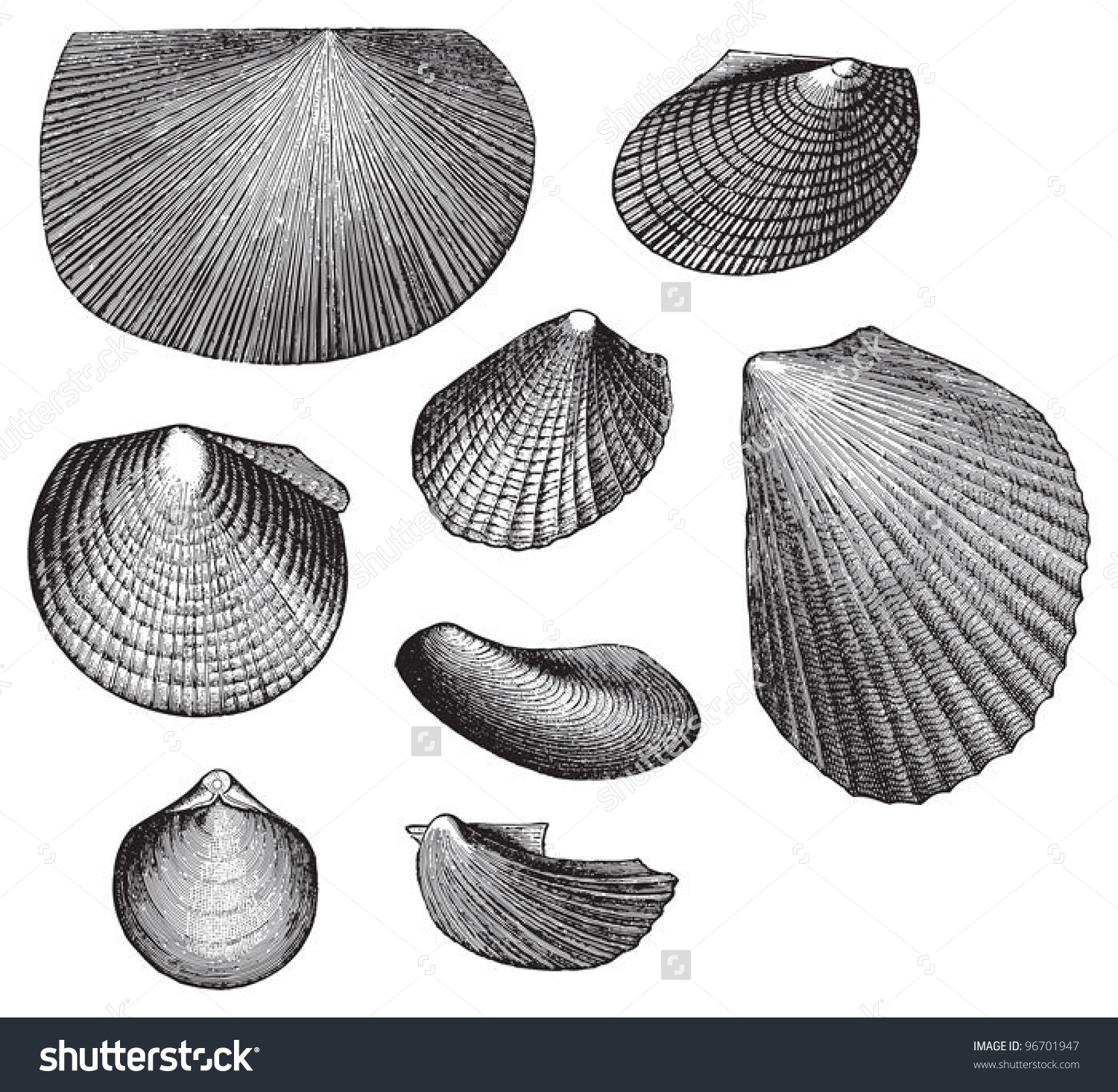 Fossil Shell Triassic Period Vintage Illustration Stock Vector.