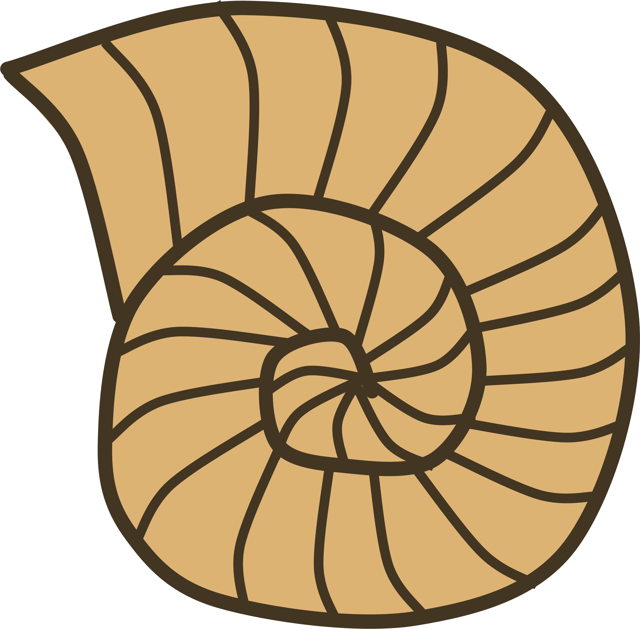 Fossil shell clipart #6