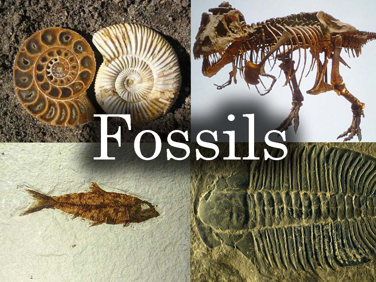 1000+ images about Fossils on Pinterest.