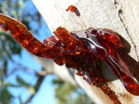 1000+ images about Amber (◕‿◕) Fossilized Tree Resin on.