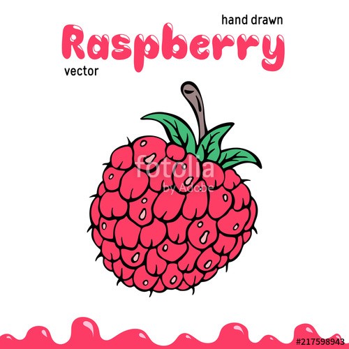 Raspberry vector illustration, berry clipart. Cartoon.