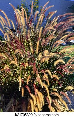 Grass fountain clipart.