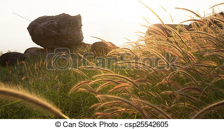 Stock Photography of Fountain Grass in windy csp25542605.