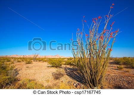 Stock Photo of Ocotillo Fouquieria splendens red flowers in Mohave.