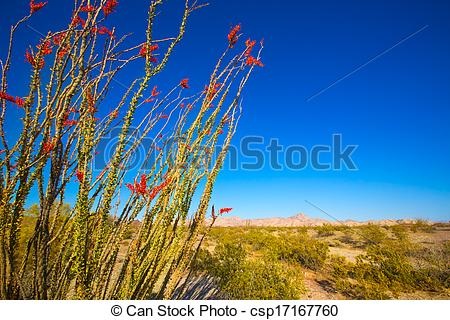 Stock Image of Ocotillo Fouquieria splendens red flowers in Mohave.