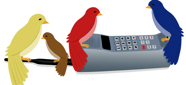 Four Calling Birds Thursday.