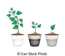 Four cornered bean Vector Clipart EPS Images. 8 Four cornered bean.