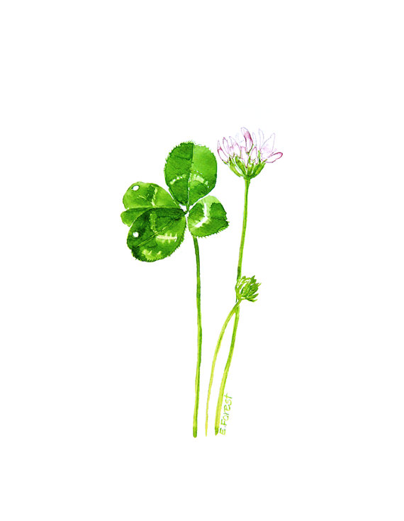 1000+ images about Four leaf clover on Pinterest.