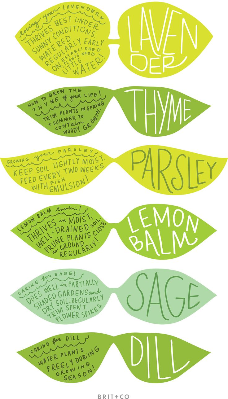 1000+ ideas about Printable Garden Labels on Pinterest.