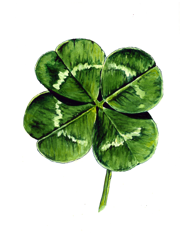 Four Leaf Herb Paris Clipart