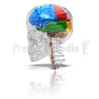 Glass Skull With Four Lobe Brain.