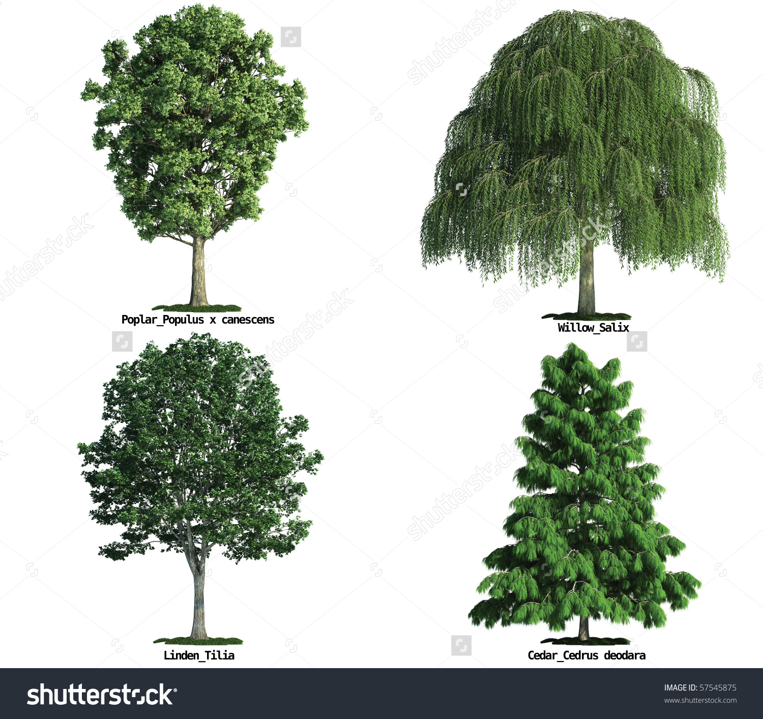 Set Four Trees Isolated Against Pure Stock Photo 57545875.