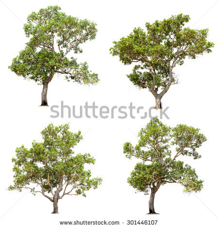 Walnut Tree Isolated Stock Photos, Royalty.