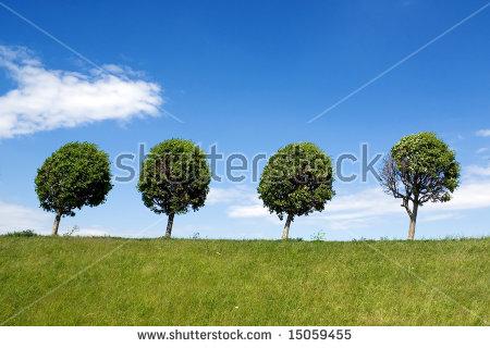 Row Of Trees Stock Photos, Royalty.