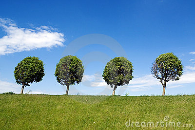 Set Of Four Trees Isolated Against Pure White Royalty Free Stock.