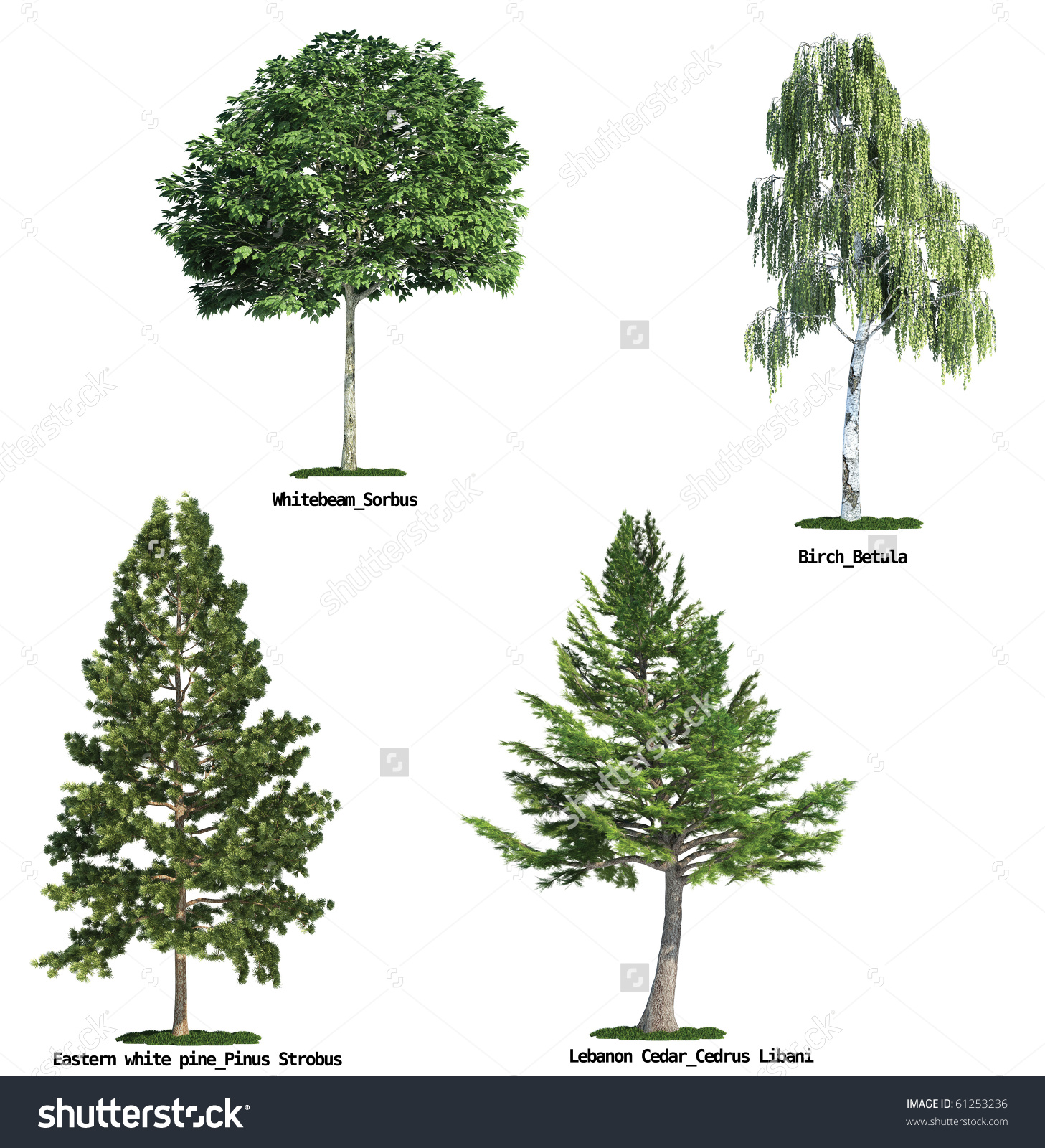 Set Four Trees Isolated Against Pure Stock Illustration 61253236.