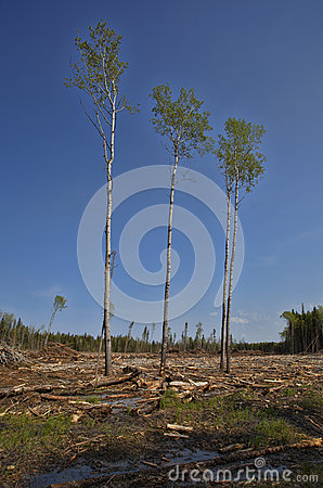 Surviving Trees Royalty Free Stock Photo.