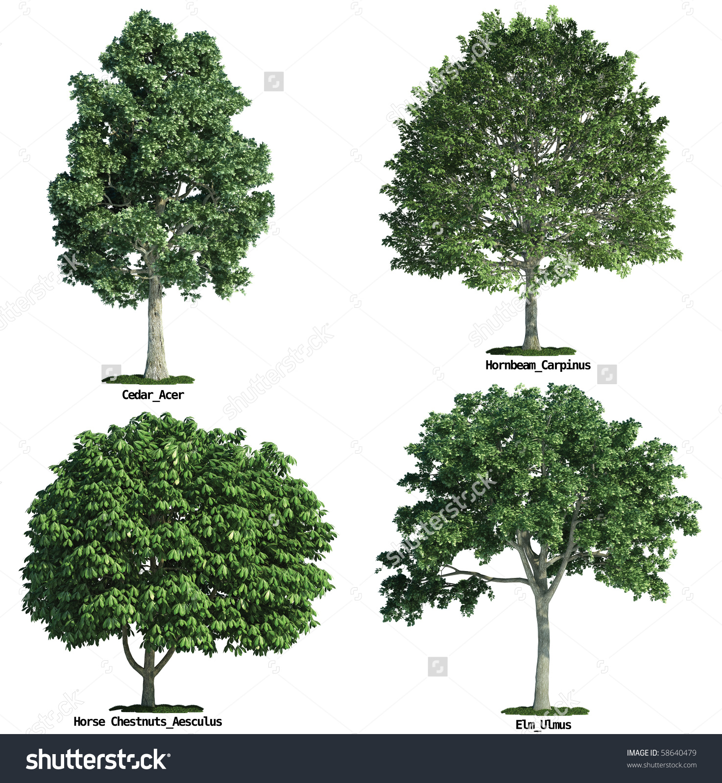 Set Four Trees Isolated Against Pure Stock Illustration 58640479.