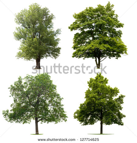 Tree Stock Images, Royalty.