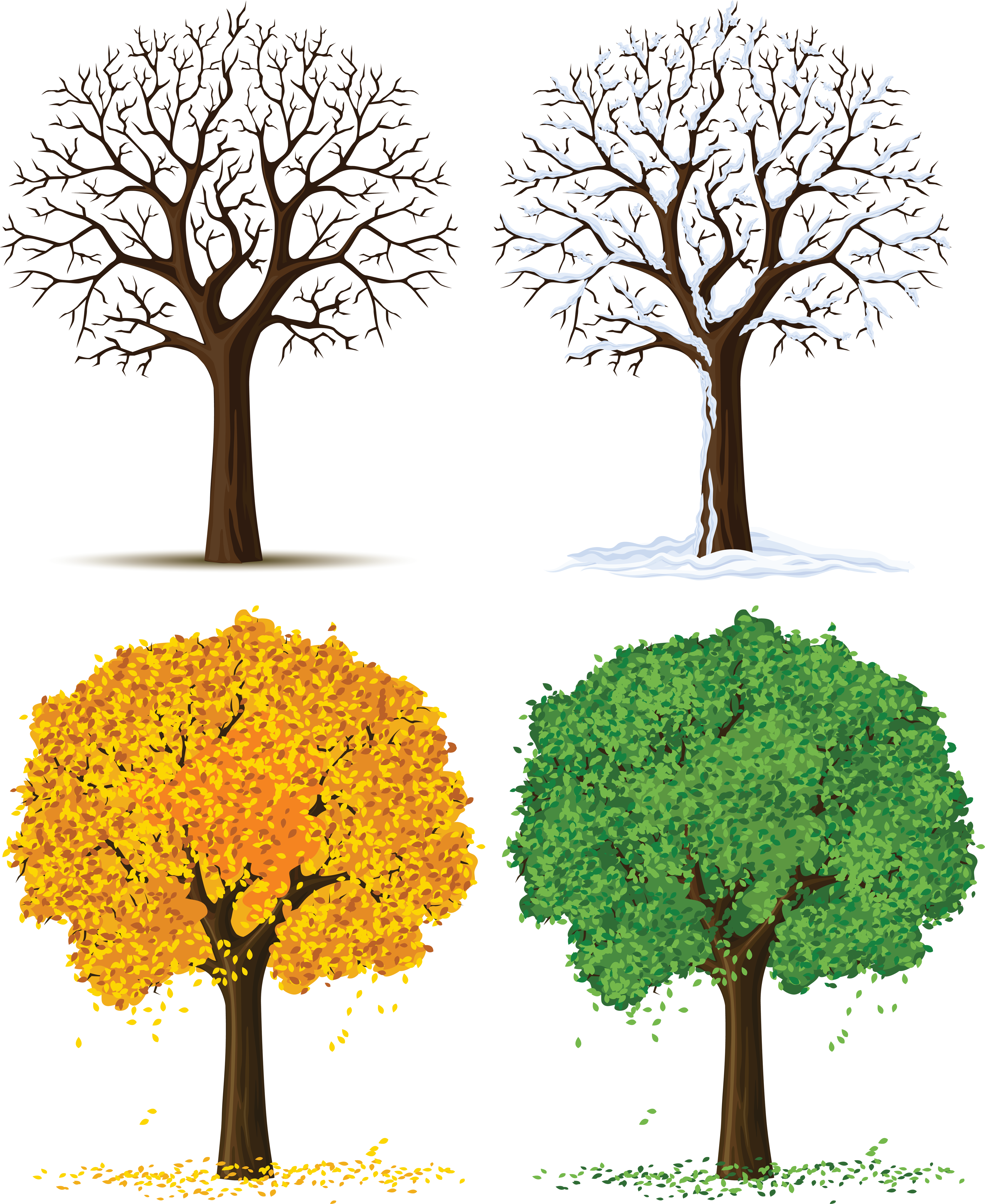 Four Seasons Trees PNG Clipart.