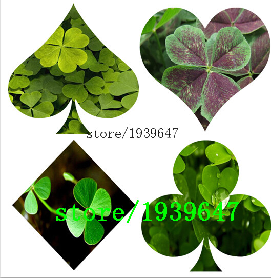 Online Get Cheap Wood Sorrel Seeds.