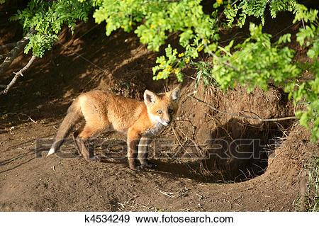 Fox den clipart 7 » Clipart Portal.