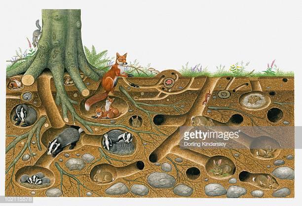 30 Top Animal Den Stock Illustrations, Clip art, Cartoons, & Icons.