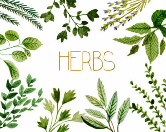Clipart Bunch Of Herbs.
