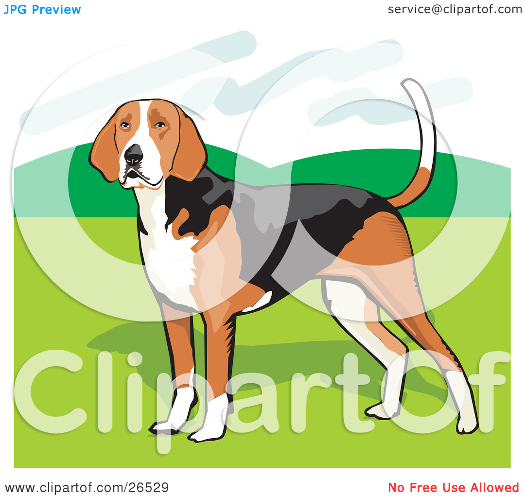 Clipart Illustration of a Brown, White And Black American Foxhound.