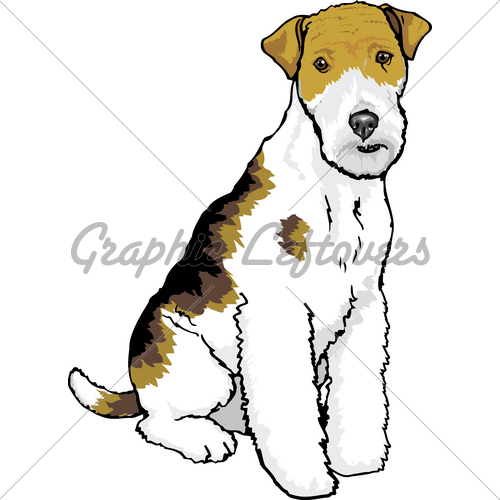 Wire Hair Fox Terrier · GL Stock Images.