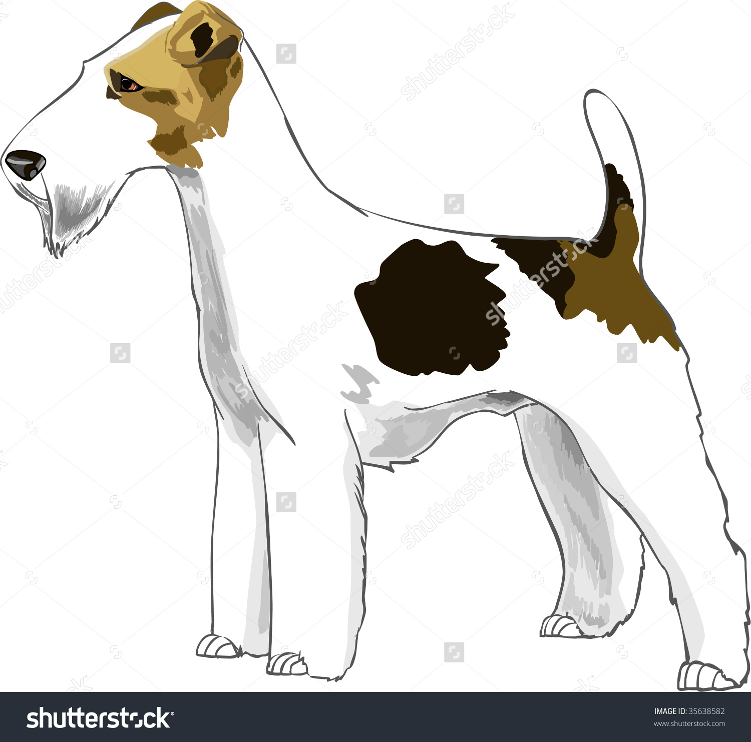Vector Fox Terrier Front White Background Stock Vector 35638582.