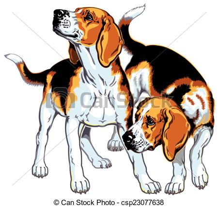 Foxhound Illustrations and Stock Art. 60 Foxhound illustration and.