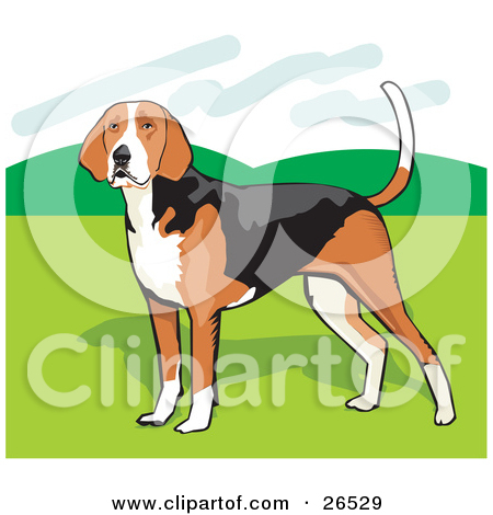 Clipart Illustration of an Alert American Foxhound Dog Standing.
