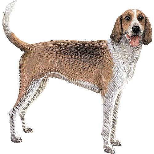Fox hound clipart.