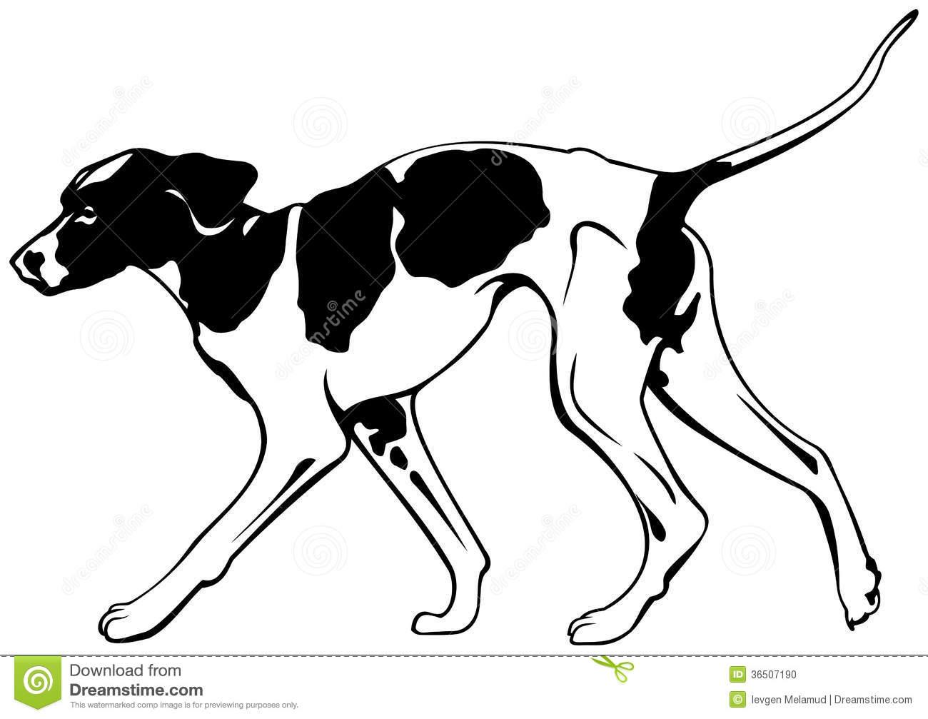 Foxhound Stock Illustrations.