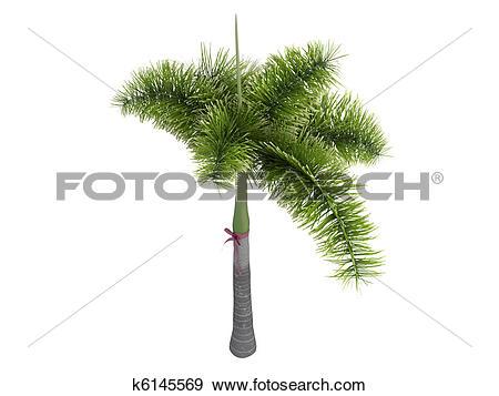 Stock Illustration of Foxtail Palm or Wodyetia bifurcata k6145569.
