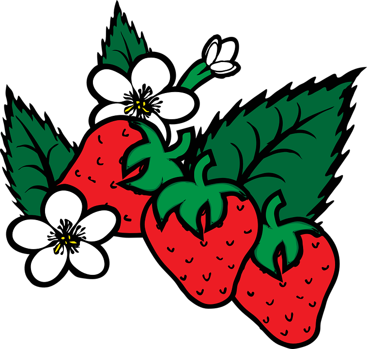 Free vector graphic: Strawberry, Fragaria, Berry, Food.