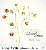 Fragaria Clip Art EPS Images. 19 fragaria clipart vector.