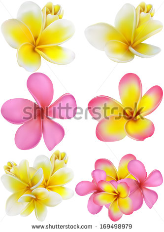 Fragrant Flowers Stock Photos, Royalty.