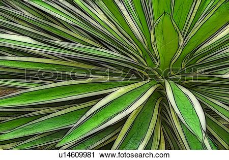 Stock Photography of Fractalius rendering of a Variegated.