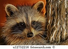 Northern raccoon Images and Stock Photos. 224 northern raccoon.