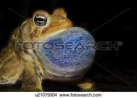 Stock Photo of Fractalius rendering of male American Toad (Bufo.