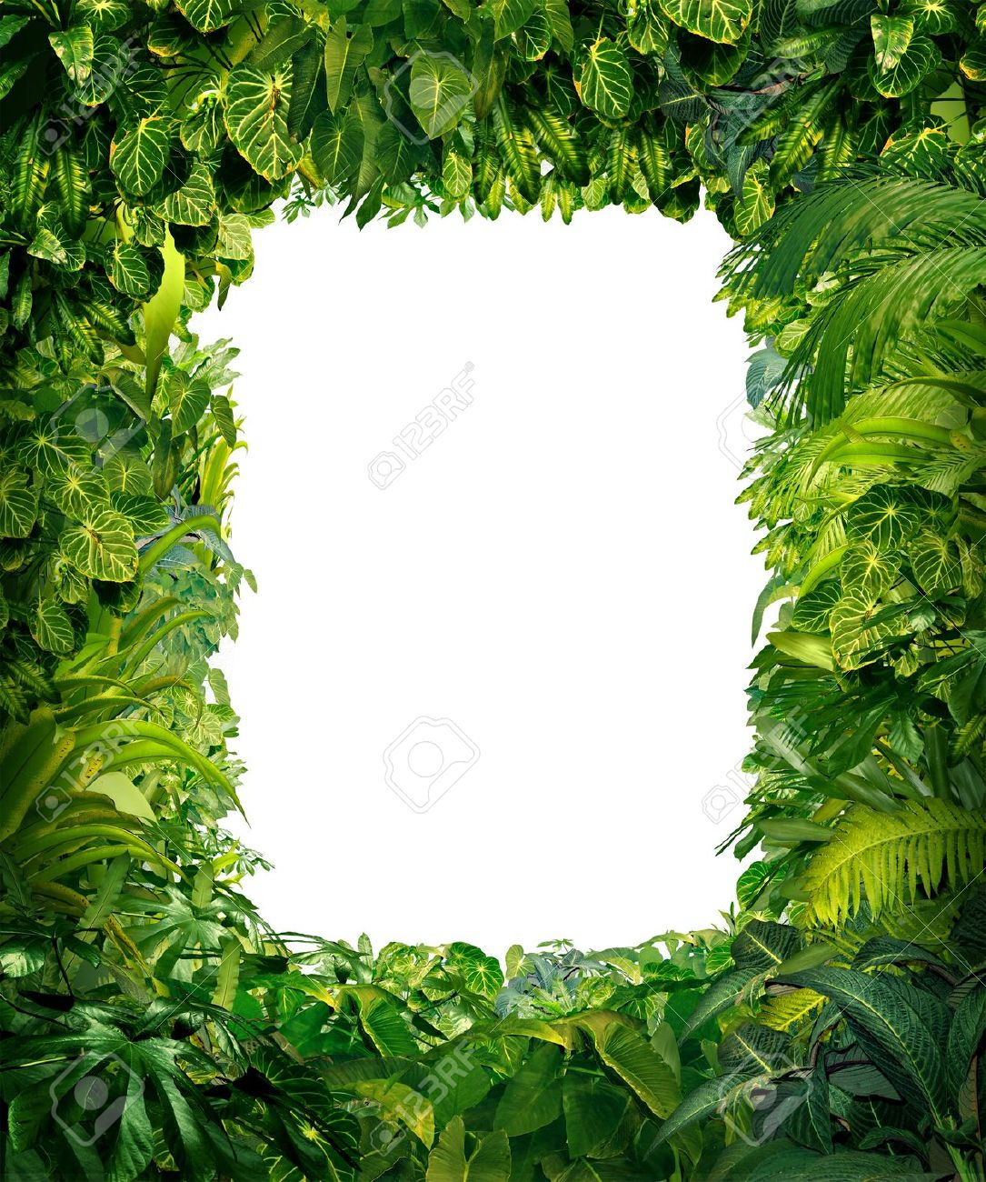 Jungle Border Blank Frame With Rich Tropical Green Plants As.