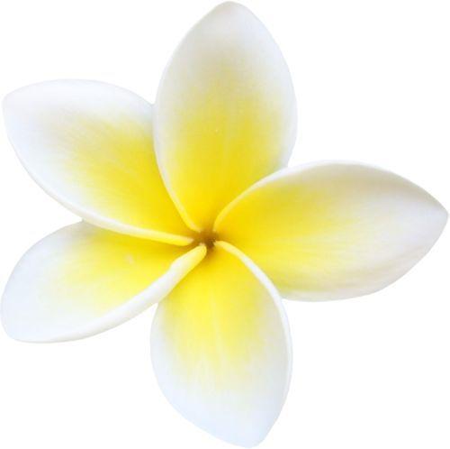 Frangipani Clipart champa flower 5.