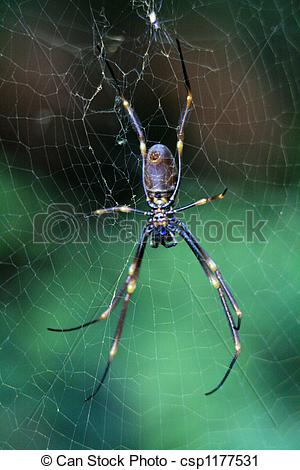 Stock Photography of Spider.