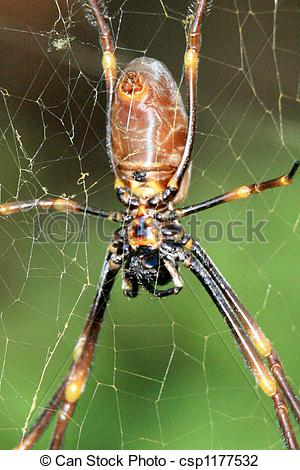 Stock Photo of Spider.