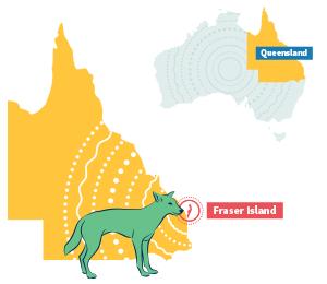 Fraser Island Tours & Accommodation.