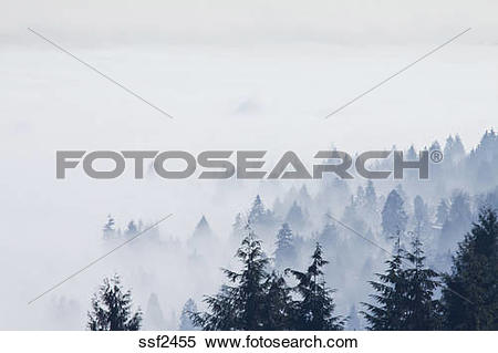 Stock Image of Coquitlam and the Fraser Valley shrouded in fog lit.