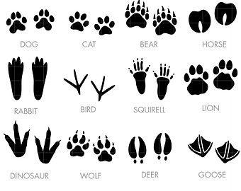 Footprint Clipart Animal Tracks Clip Art Bare Footprint.